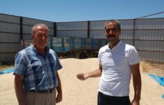 Afşin'de Siyez Buğdayının Hasadı Tamamlandı