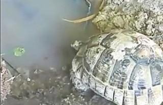 Kaplumbağalar Su İçsin Diye Su Kuyusu Açtılar