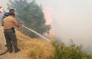 Afşin'de  Orman Yangını
