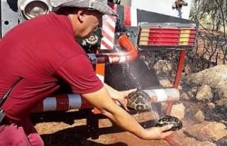 Ormancılar Kaplumbağaları Yanmaktan Kurtardı
