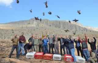 Elbistan'da 500 Kınalı Keklik Doğayla Buluştu