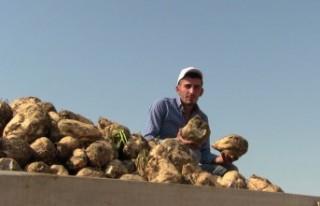 Kahramanmaraş'ta Şeker Pancarı Alımına Başlandı