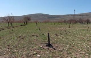 Jandarma, Elbistan'da Kayısı Ağaçlarını Kesen...