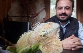 4 Yıldır Beslediği İguana En Yakın Arkadaşı...