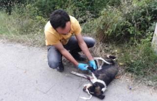 Kahramanmaraş'ta Tüfekle Ateş Edilen Köpek...