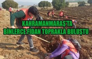 Kahramanmaraş'ta Binlerce Fidan Toprakla Buluştu