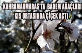 Kahramanmaraş'ta Badem Ağaçları Kış Ortasında...