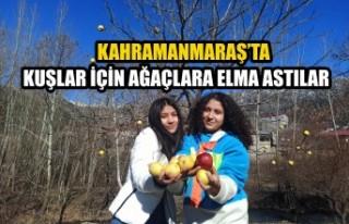 Kahramanmaraş'ta Kuşlar İçin Ağaçlara Elma...