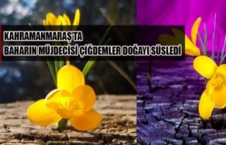 Kahramanmaraş'ta Baharın Müjdecisi Çiğdemler...