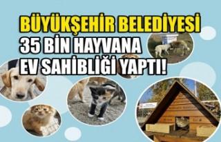 Büyükşehir 35 Bin Canın Evi Oldu