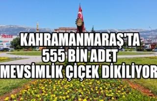 Kahramanmaraş'ta 555 Bin Adet Mevsimlik Çiçek...