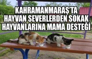 Kahramanmaraş'ta Hayvan Severlerden Sokak Hayvanlarına...