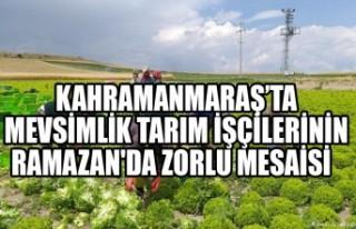 Kahramanmaraş'ta Mevsimlik Tarım İşçilerinin...