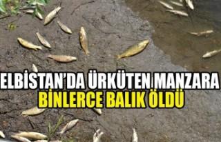 Elbistan'da Binlerce Balık Telef Oldu