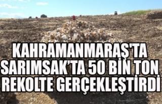 Kahramanmaraş'ta Sarımsakta 50 Bin Ton Rekolte...