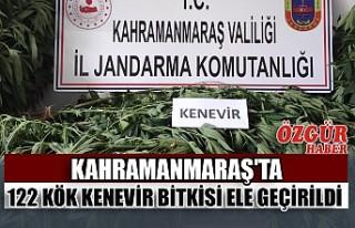 Kahramanmaraş'ta 122 Kök Kenevir Bitkisi Ele...