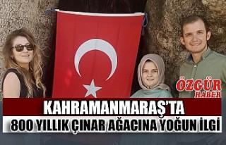 Kahramanmaraş'ta 800 Yıllık Çınar Ağacına...