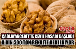 Çağlayancerit'te Ceviz Hasadı Başladı 8 Bin...