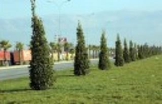 Büyükşehir'den 2 Ayda 5 Bin Ağaç