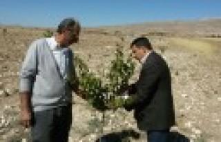 Elbistan'da Fidan Yardımı Çalışmaları Başladı