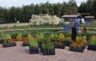 Türkoğlu Kendi Yetiştirdiği Çiçekler İle Güzelleşiyor