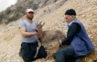 Yavru Karacayı Köylüler Kurtardı