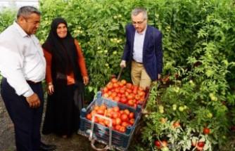 Başkan Güngör: Kahramanmaraş'ımız Tarımın da Başkentidir