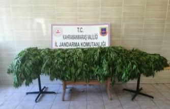Kahramanmaraş'ta Jandarmadan Uyuşturucu Operasyonu