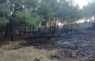 Kahramanmaraş'ta Anız Yakarken Ormanı da Kül Ettiler