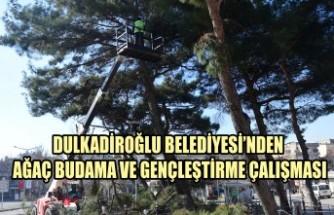 Dulkadiroğlu'nda Ağaç Budama ve Gençleştirme Çalışması