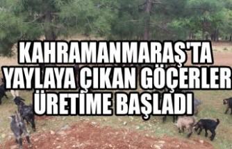 Kahramanmaraş'ta Yaylaya Çıkan Göçerler Üretime Başladı