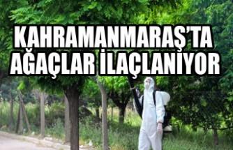 Kahramanmaraş'ta Ağaçlar İlaçlanıyor