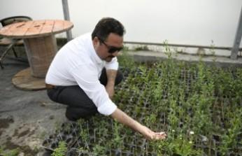 Elbistan'da Lavanta Vadisi Oluşturuluyor